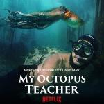 600px-My_Octopus_Teacher.jpg
